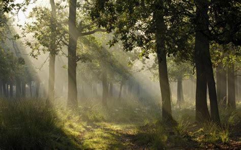 hd mystical light   german forest wallpaper