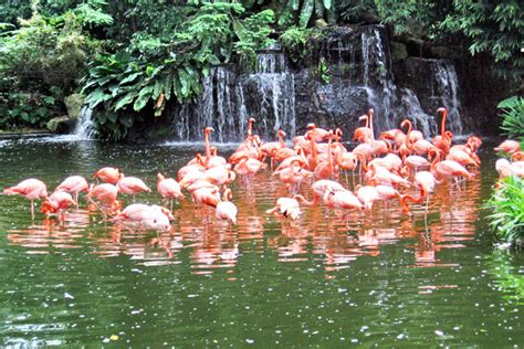 Who Created The Traffic Light by Flamingo Wildlife Habitat Review Exploring Las Vegas