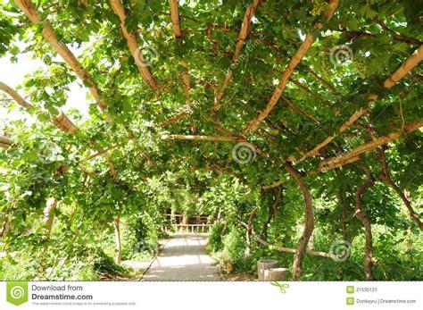 veranda und vino pergola da uva imagem de stock imagem 21535121