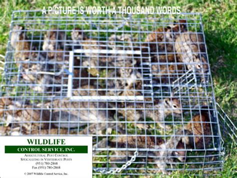 image gallery squirrel traps