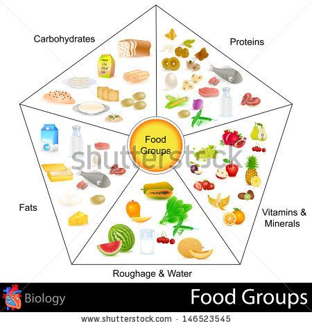 7 food groups carbohydrates easy to edit vector illustration of food chart