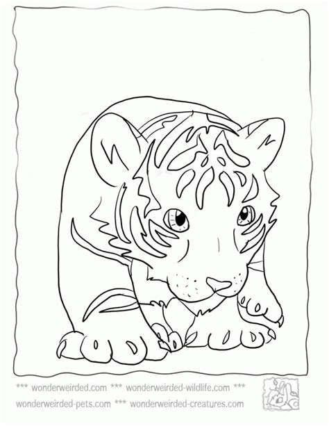 coloring pages baby tiger baby tiger coloring pages coloring home