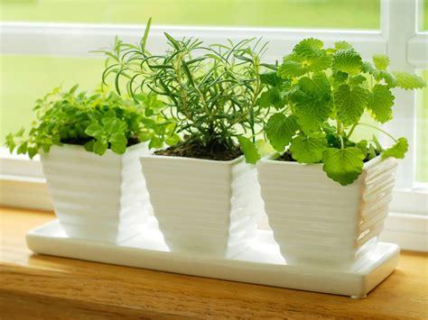 kitchen herb garden ideas 10 easy diy kitchen herb gardens room bath