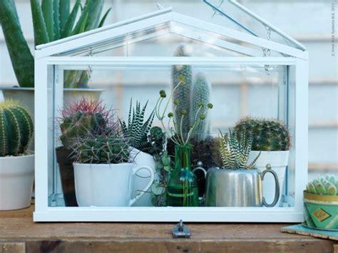 socker greenhouse les 25 meilleures id 233 es concernant mini serre sur