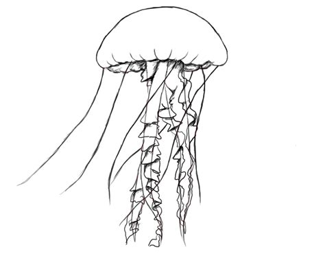 Drawing Jellyfish by How To Draw Jellyfish