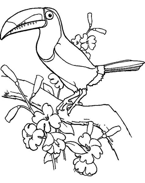 coloring page of a toucan bird cartoon toucan pictures 1543527 coloring page of a