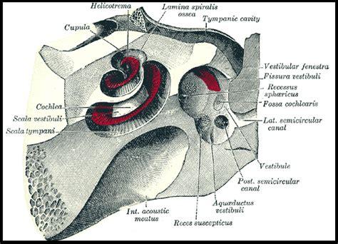 pressione orecchio interno orecchio