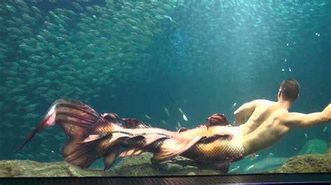 mertailor s newest merman tail design   youtube