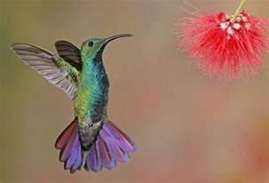 colorful hummingbirds colorful hummingbirds 39 photos funmag org