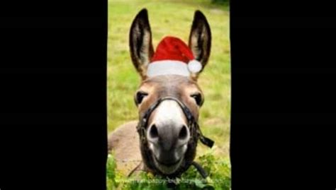 donkeys funny christmas song  social  ecards