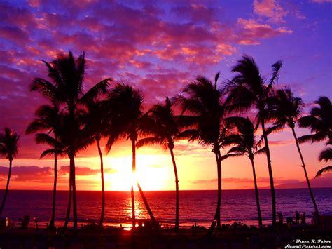 The Eagle Chronicles the eagle blue chronicles hawaii calls