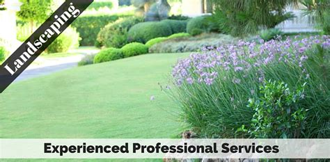 professional landscaping professional tree services landscaping tree removal