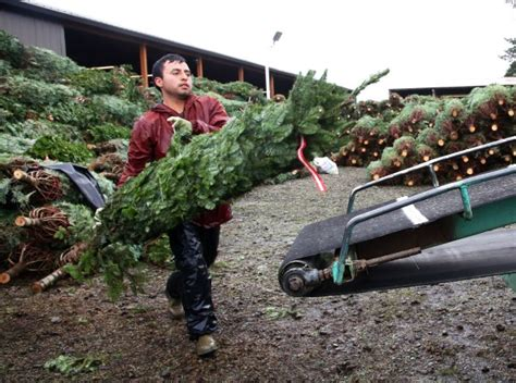 oregon christmas tree growers s nafta threat makes him the grinch to oregon tree growers oregonlive
