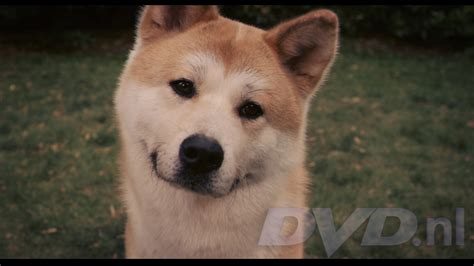 what of is hachi hachi a s story allesoverfilm nl filmrecensies hardware
