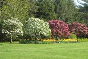 Easy And Cheap Backyard Ideas Types Of Trees For Landscaping Most Popular 2016