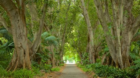 Adelaide Botanic Gardens Adelaide Botanic Gardens In Adelaide South Australia Expedia