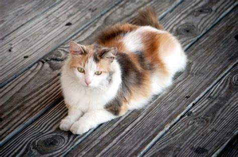 stray cat feel  home pets