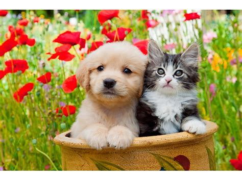 low cost puppy low cost pet vaccines at tails n whiskers frankfort il patch