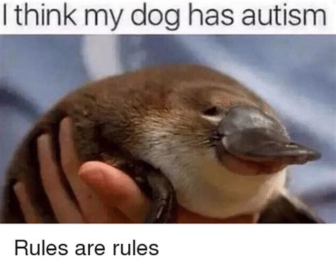 i think my has autism autism memes of 2017 on sizzle 13yo