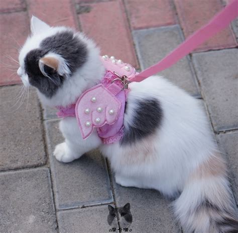 comfort cat adorable comfort cat dog kitty puppy safety walking