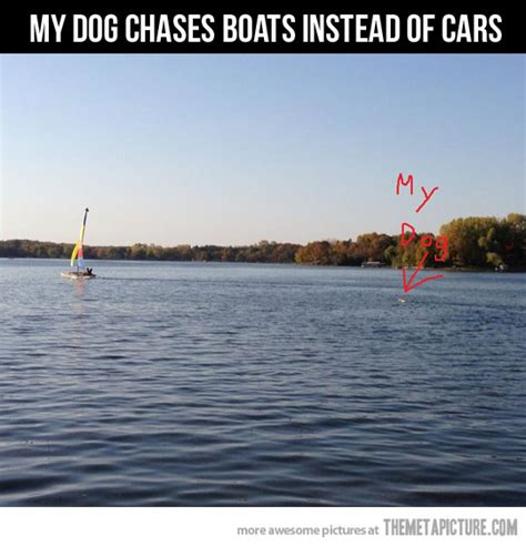 funny boat pictures boat chaser the meta picture