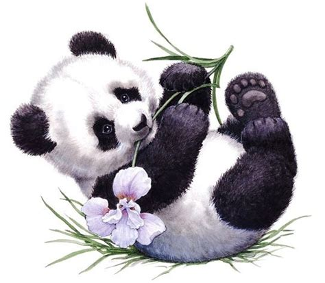 panda tattoo vorlage 1000 ideas about panda tattoos on pinterest panda