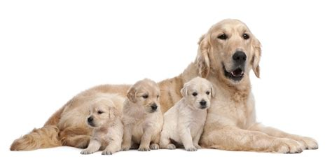 when should puppies get their responsible st clair veterinary care
