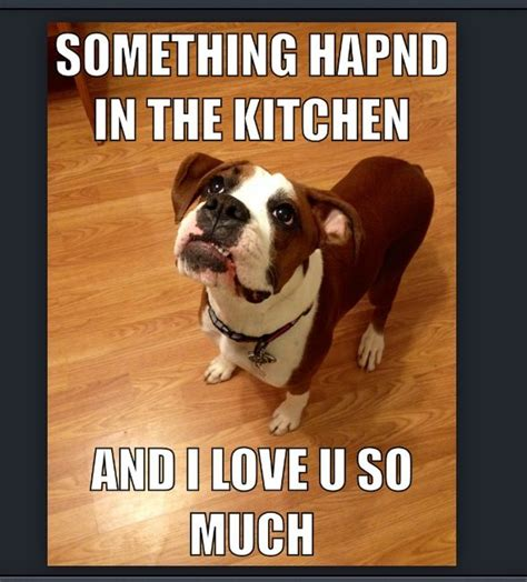 Much Dog Meme - funny boxer meme dog memes pinterest funny pets and
