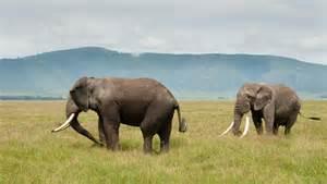 east african safari gorilla trekking maasai mara