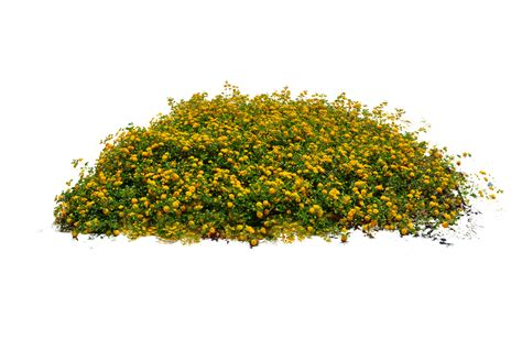 flower garden png yellow flower bed stock photo dsc 0104 png by annamae22