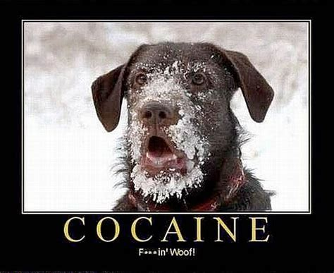 can dogs talk cocaine can make dogs talk picture ebaum s world