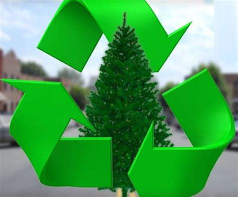 christmas tree and holiday recycling edco to offer free