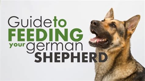 best puppy food for german shepherd best food for german shepherds top 4 picks 2017