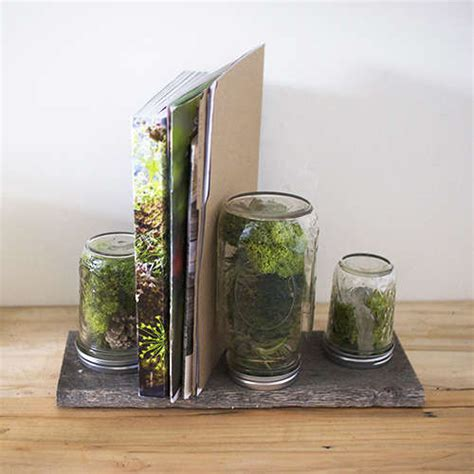 Office Desk Terrarium Tiny Office Terrariums Diy Office Terrarium