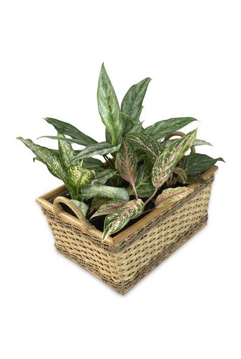 Pot Tanaman Pot Bunga Tanaman Hias Pot Taman Hiasan Taman Pot Gantung gambar menanam daun hijau herba menghasilkan taman