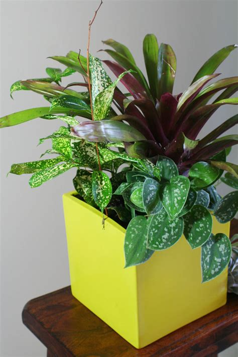 indoor plant arrangements create eye catching indoor container gardens