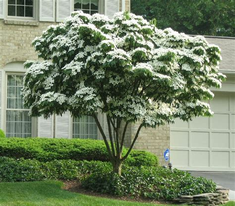 landscapers nc landscaping ideas nc landscapers