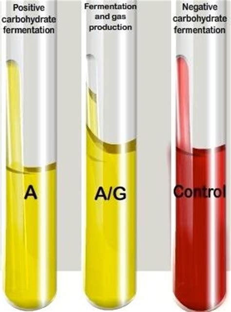 carbohydrates used for differentiating bacteria carbohydrate fermentation test uses principle procedure