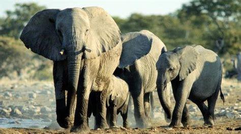 nedlasting filmer the elephant man gratis markusfraedrich de