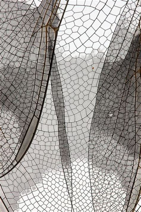the pattern and nature of urbanization best 25 natural texture ideas on pinterest nature