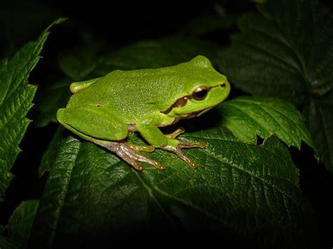 una rana a frog 191 c 243 mo ser m 225 s productivo c 243 mete una rana recomienza