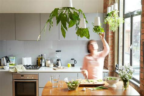 kitchen herb how to decorate your kitchen with herbs 40 ideas decoholic