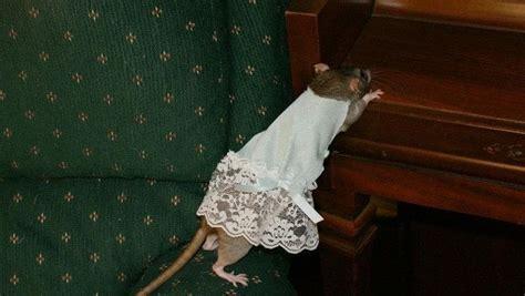 rat dresses pet clothes needlework  cut