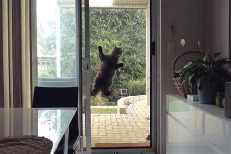 Door With Cat Door cat vs screen door huffpost uk