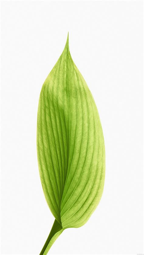 one leaf lotus green lotus leaf best htc one wallpapers free and easy