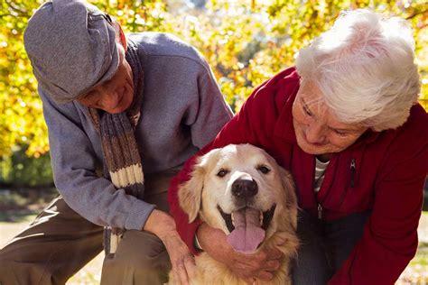 perros con personas mascotas y personas mayores www doogweb es