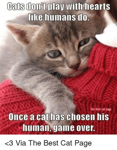 The Best Cat Memes - 25 best memes about best cat best cat memes