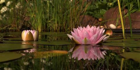 posizione fiore di loto padmasana la posizione loto il giornale dello