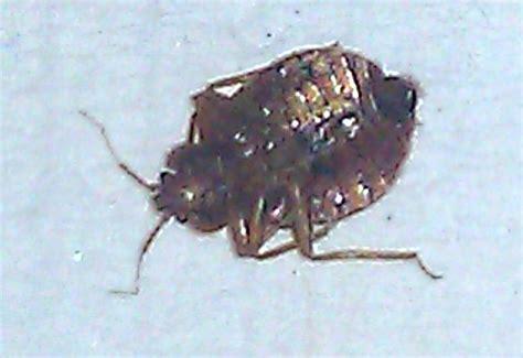 bed bug epidemic west nile virus bed bugs registry
