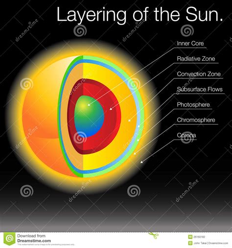diagram  corona virus particle structure cartoon vector